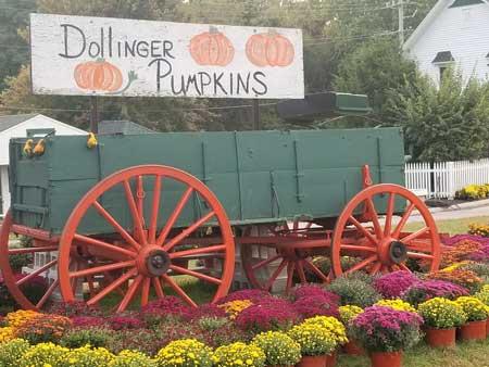 pumpkins-sign-mums